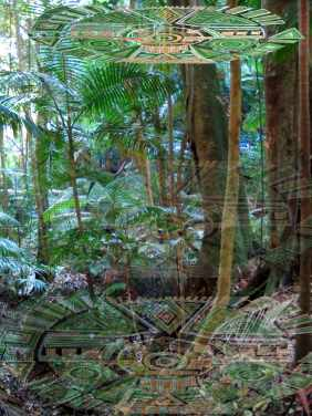 old-growth rainforest grid
